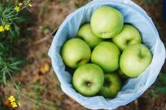 绿色苹果篮子 库存图片
