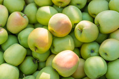 绿色苹果(非常有趣) 库存图片