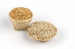 黄色茉莉属成熟米和糙米(野生稻漂白亚麻纤维的L.)。 库存图片