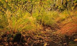 黄色草在秋天 免版税库存照片