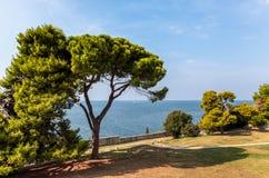 绿色草坪、树和植物看法  免版税库存照片