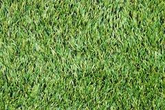 绿色草坪。草 免版税库存照片