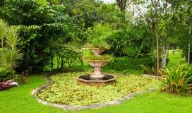 绿色草坪和树公园 图库摄影