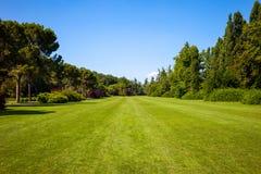 绿色草坪和树 免版税库存照片