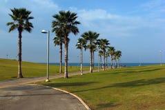 绿色草坪和棕榈在海滨公园在明亮的晴天 免版税图库摄影