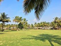 绿色草坪和棕榈树 免版税库存图片