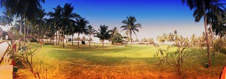 绿色草坪和棕榈树 免版税图库摄影
