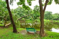 绿色草坪和结构树 图库摄影