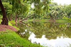 绿色草坪和结构树 免版税库存图片