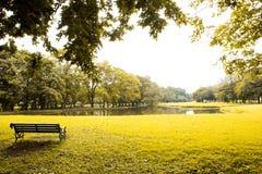绿色草坪和结构树 免版税图库摄影