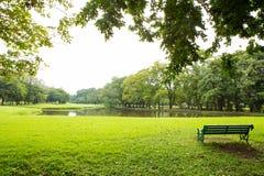 绿色草坪和结构树 免版税库存照片