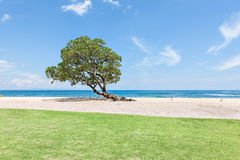 绿色草坪在与树的海滩边 库存图片