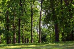 绿色草坪在橡木森林里 免版税库存图片