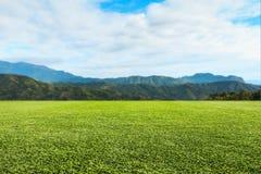 绿色草坪天空和山 免版税库存图片