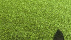 绿色草坪展开 3d生态和庭院的动画 影视素材