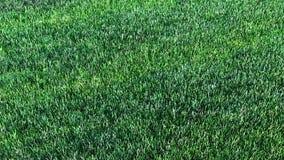 绿色草坪展开 3d生态和庭院的动画 股票视频