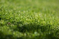 绿色草坪模式 免版税图库摄影