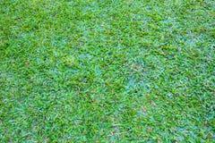 绿色草坪模式 免版税库存图片