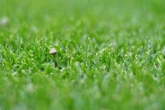 绿色草坪用背景的蘑菇 免版税库存照片