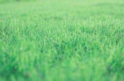 绿色草坪背景在泰国的前院 免版税库存照片