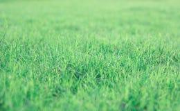 绿色草坪背景在泰国的前院 库存照片