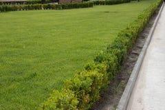 绿色草坪/背景 库存图片