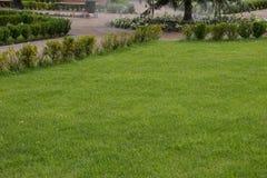 绿色草坪/背景 库存照片