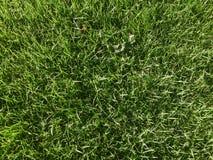 绿色草坪 免版税图库摄影