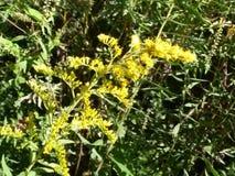 黄色草木樨田纳西河 免版税库存图片