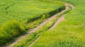 绿色草甸和土路 免版税库存图片