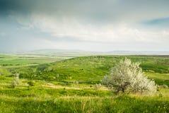 绿色草甸和孤独的布什 免版税图库摄影