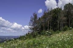 绿色草甸和Forrest, Omanovac,克罗地亚 库存图片