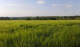 绿色草甸在塞尔维亚 图库摄影