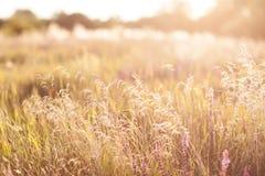 绿色草甸在蓝天下。 库存图片