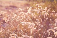 绿色草甸在蓝天下。 免版税库存照片
