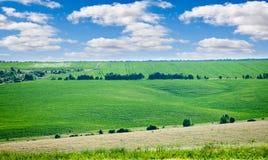 绿色草甸夏天 免版税库存图片