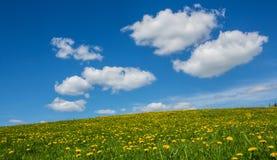 绿色草甸用蒲公英和天空与云彩 免版税库存照片