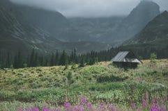 绿色草甸的单独房子 图库摄影