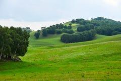 绿色草甸的森林 免版税图库摄影