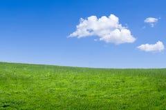 绿色草甸背景 免版税库存照片