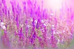 紫色草甸花 免版税库存照片