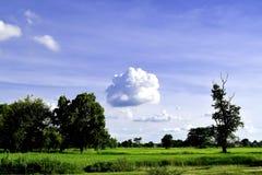 绿色草甸,白色云彩,蓝天 免版税库存图片