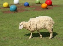绿色草甸绵羊 库存图片