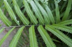 绿色草被雕刻的叶子,美好的背景, 免版税库存照片