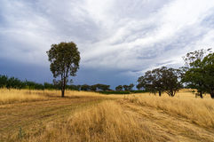 黄色草,干草领域 库存照片