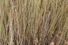 黄色草以秋天黄色和绿色 免版税库存照片