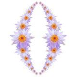 紫色莲花或荷花花 免版税库存照片