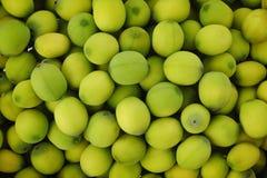 绿色莲花种子 免版税库存照片