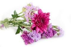 紫色菊花和Statice花,桃红色紫色口气流程 免版税库存照片