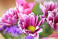 紫色菊花装饰 免版税库存照片